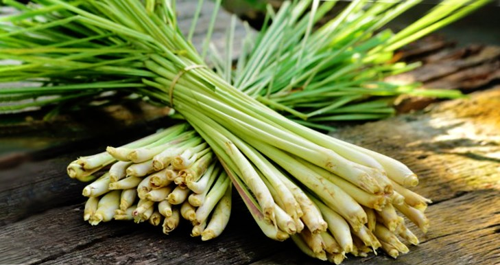 Herbs Amp Spices Lemongrass Health Benefits Amp Cooking Tips